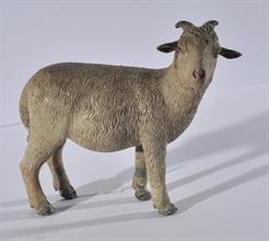 Lotto 80 - Cucciolo di ariete